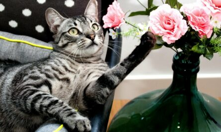cat with pink flowers