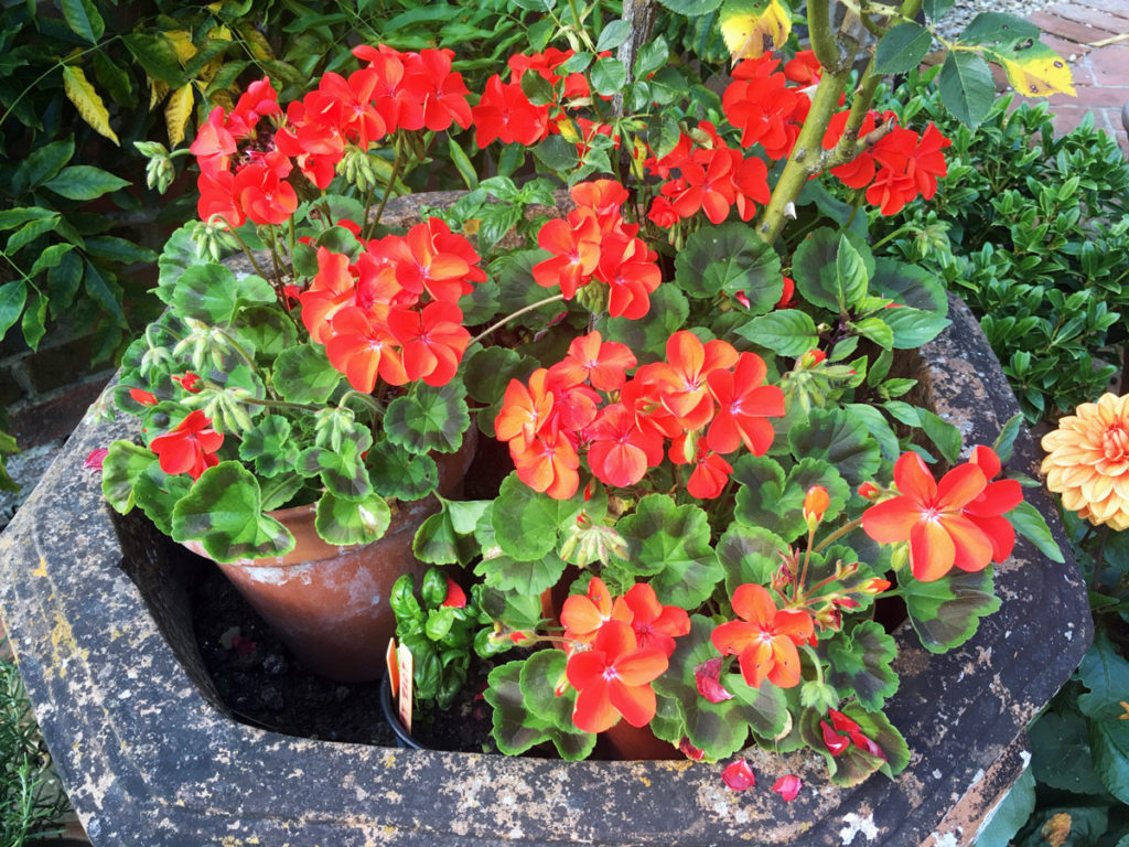 adding more plants like these, will stop your cat from being able to access the plant pot to use as a toilet