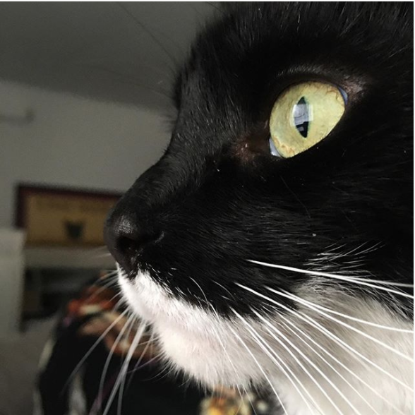 green eyed black and white cat