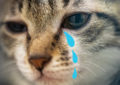 crying cat blue tears