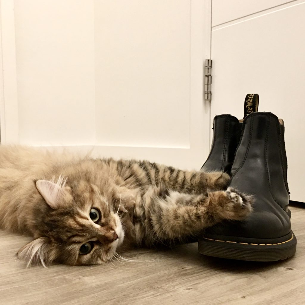 long haired fluffy tabby lying on floor with paws on a pair of black Doctor Martin boots
