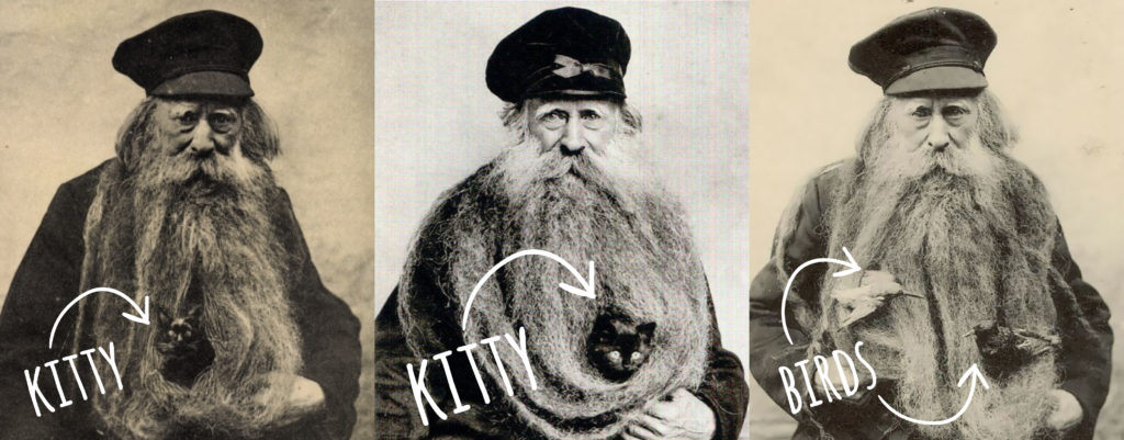 Three photos of the bearded louis coulon. Two show a cat in beard, another with birds.